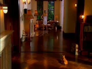佐藤 江梨子、Eカップ巨乳の長身グラドル…だった頃の動画を懐かしく観てみる